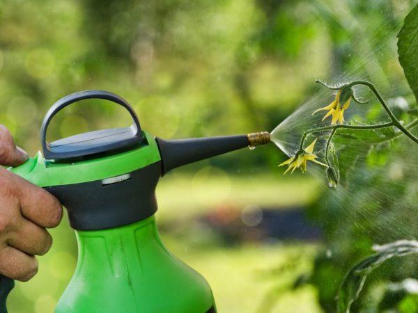 Опрыскивание селитрой благотворно влияет на рост растений