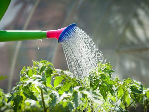 Содовый раствор повышает урожайность растений