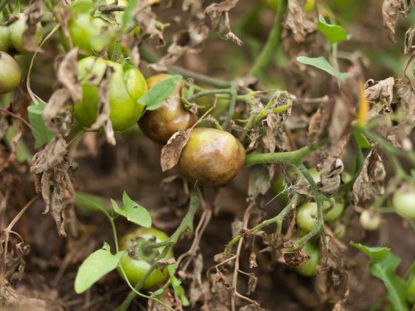 От качества почвы зависит здоровье растений