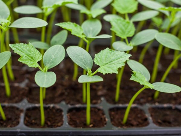 Растения нужно обеспечить хорошим уходом