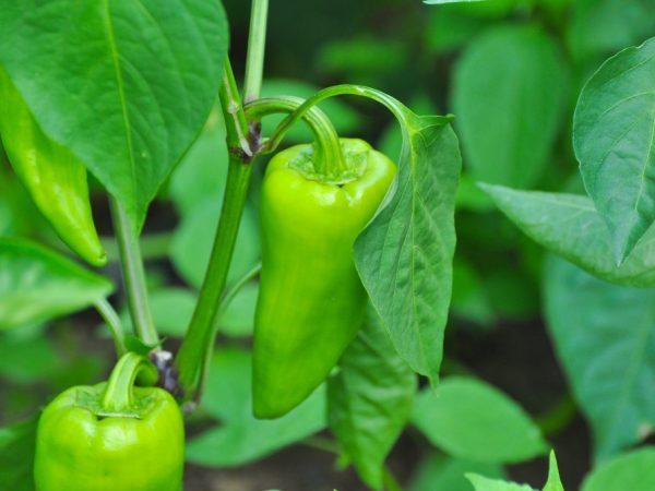 Ухаживать за растениями несложно