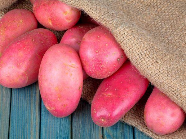 Вкусная и урожайная картошка