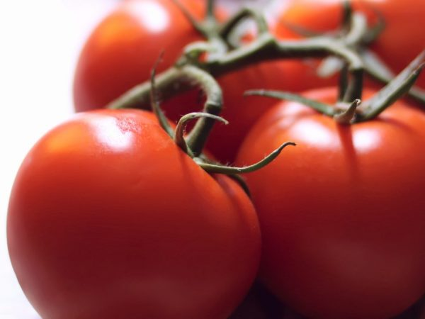 Характеристика томатов сорта Чудо Рынка