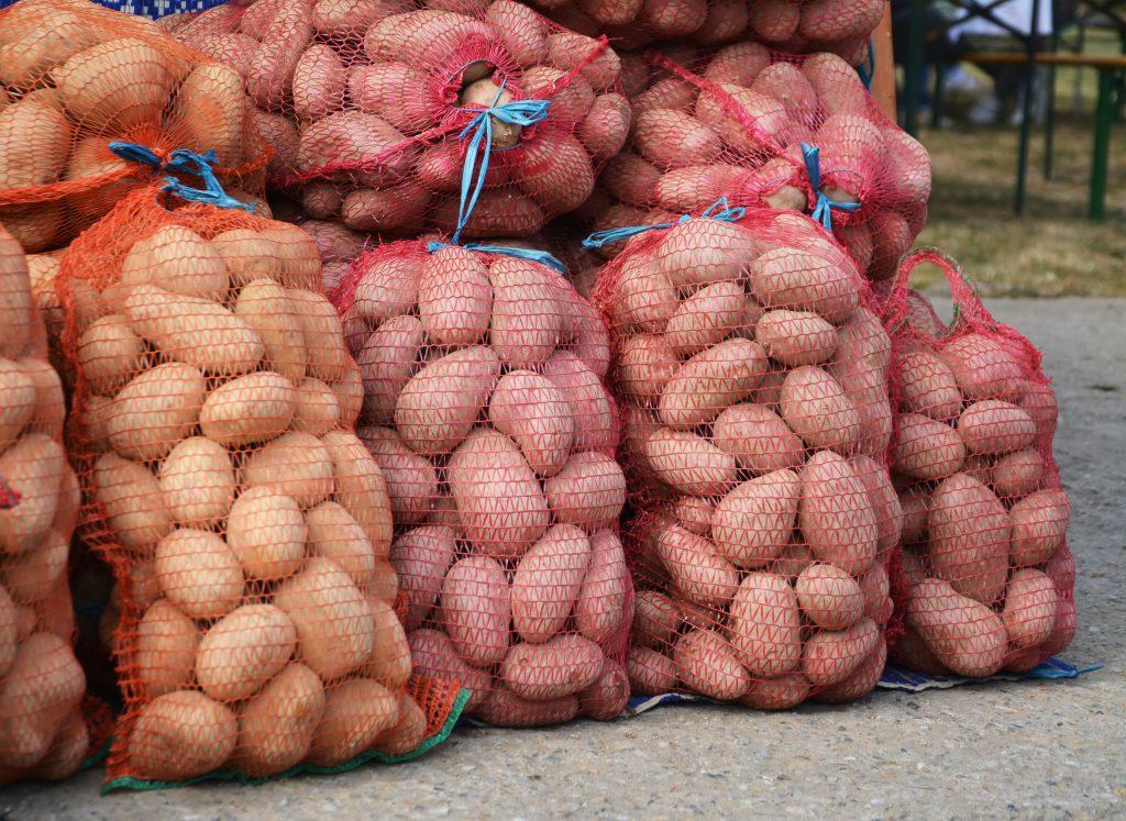 Как правильно выбрать сидераты для посева после картофеля?
