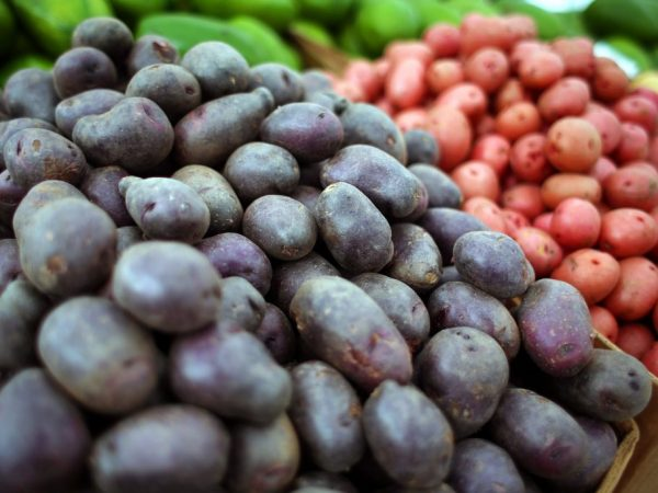 Лучшие сорта картофеля семенами