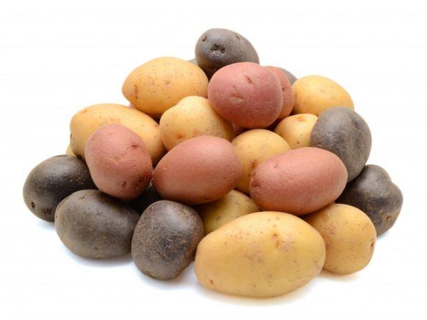 Хорошая семенная картошка