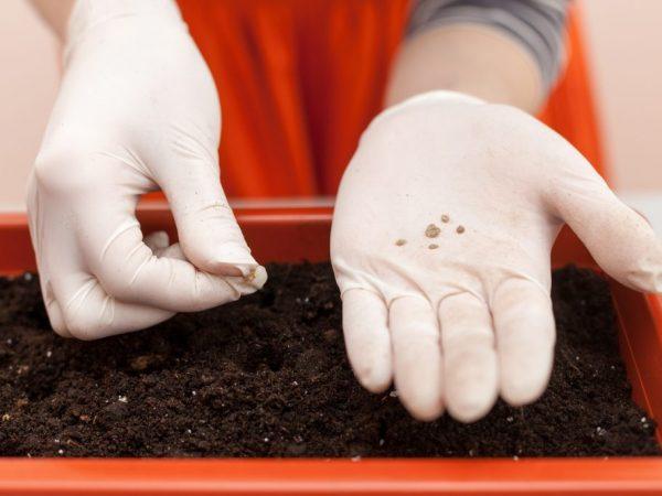 От качества грунта зависит здоровье растений