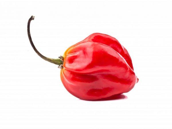 Полезный и вкусный перец
