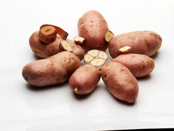 Картофель может навредить