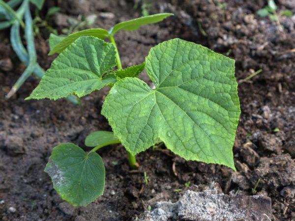 Органические удобрения безопасны