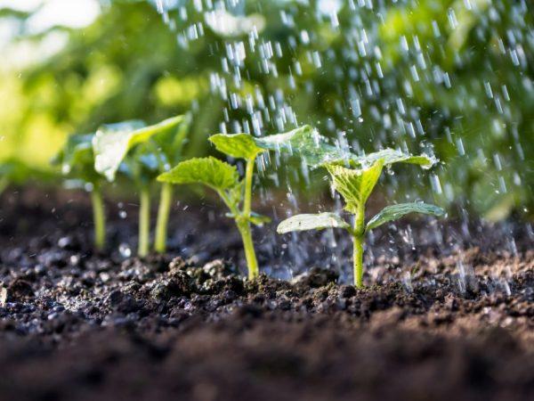 Полив очень важен для растений