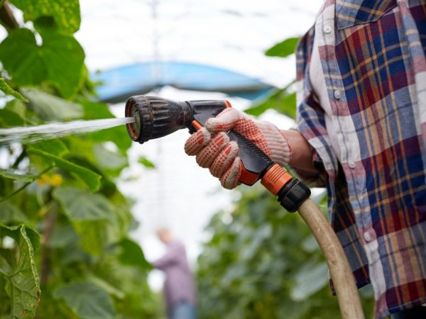 Для полива используйте шланг с распылителем