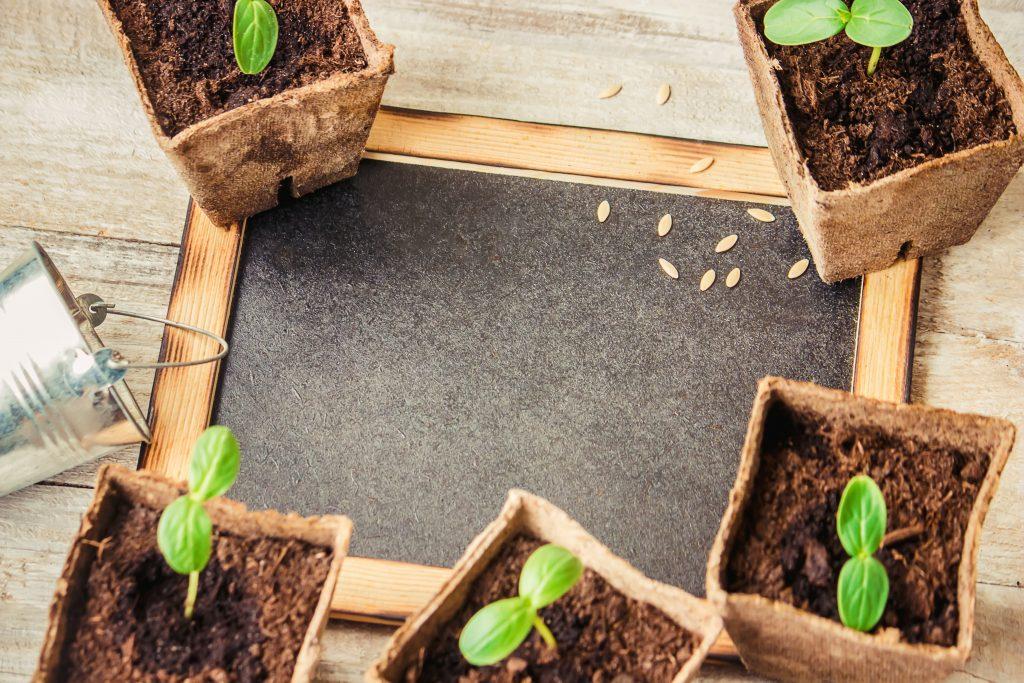Как сажать огурцы семенами: какой стороной, фото