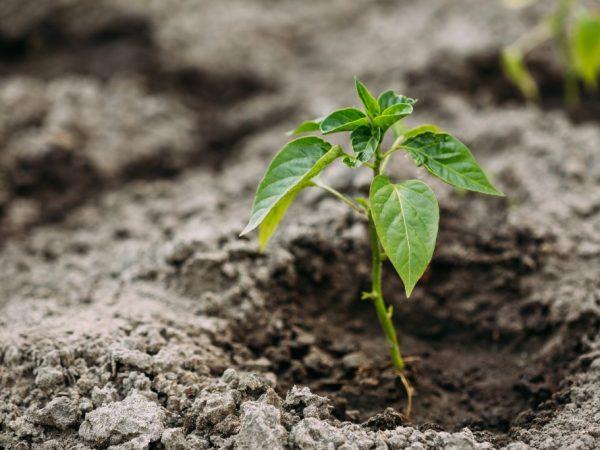 Берегите растения от болезней