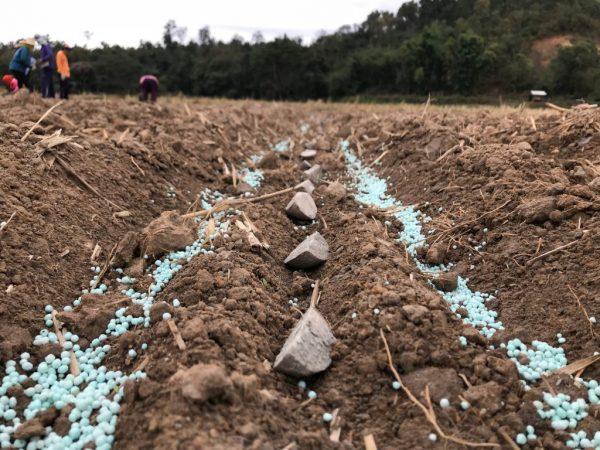 Удобрение для подпитки почвы при посадке картофеля
