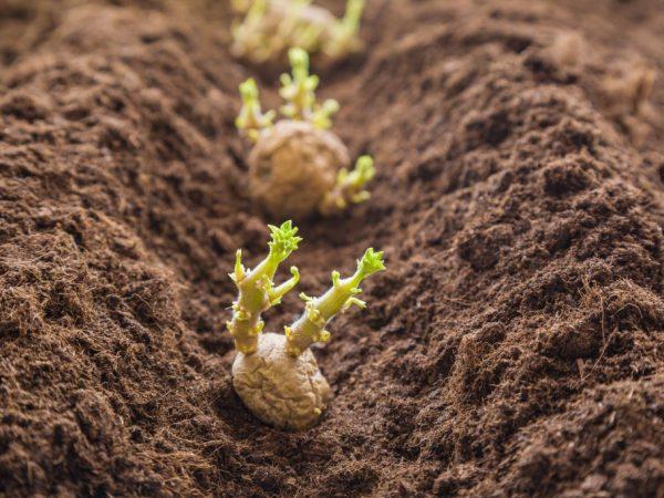 Почва должна быть удобрена