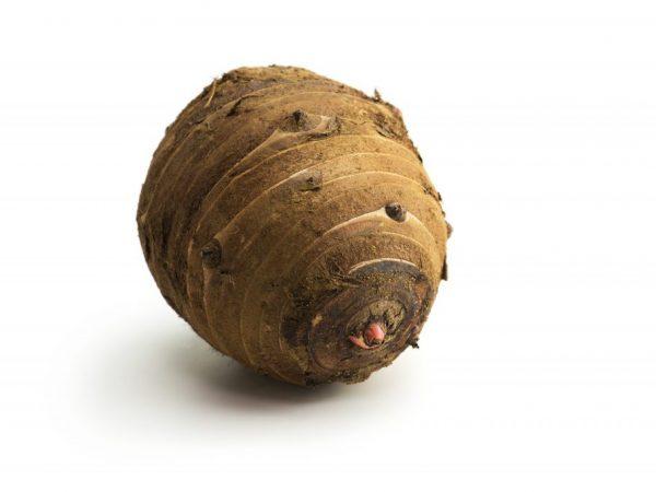 Китайская технология выращивания картофеля