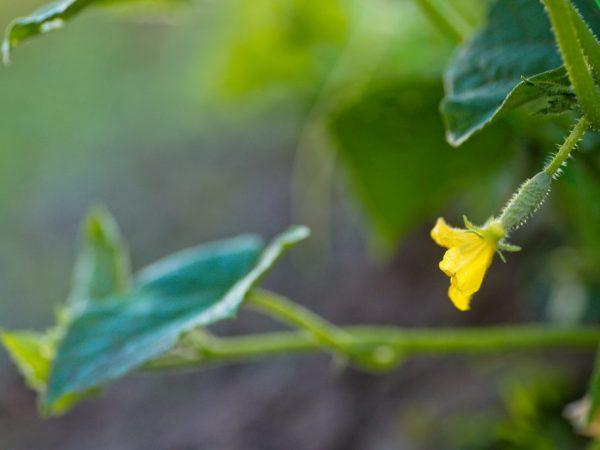 Высаживайте растения согласно схеме
