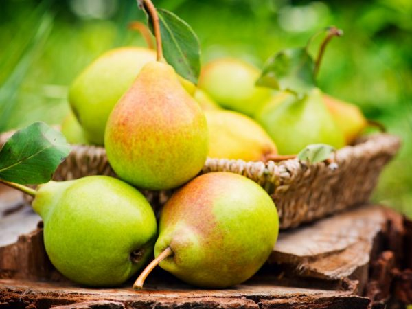 Плоды зелёные, крупные средний вес составляет около 200 гр.