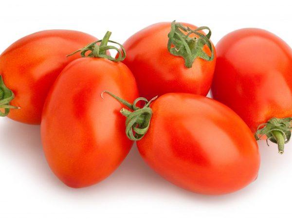 томат маруся характеристика и описание сорта отзывы
