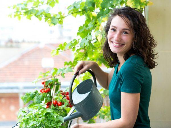 как посадить помидоры на балконе
