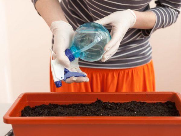 Семена и почву перед посадкой нужно подготовить