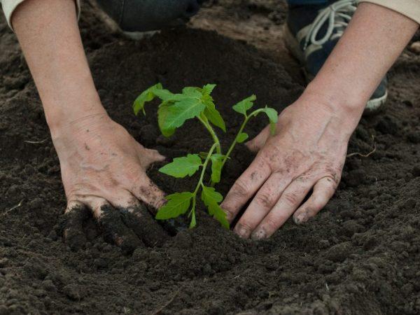 Удобрения могут стимулировать рост и плодоношение