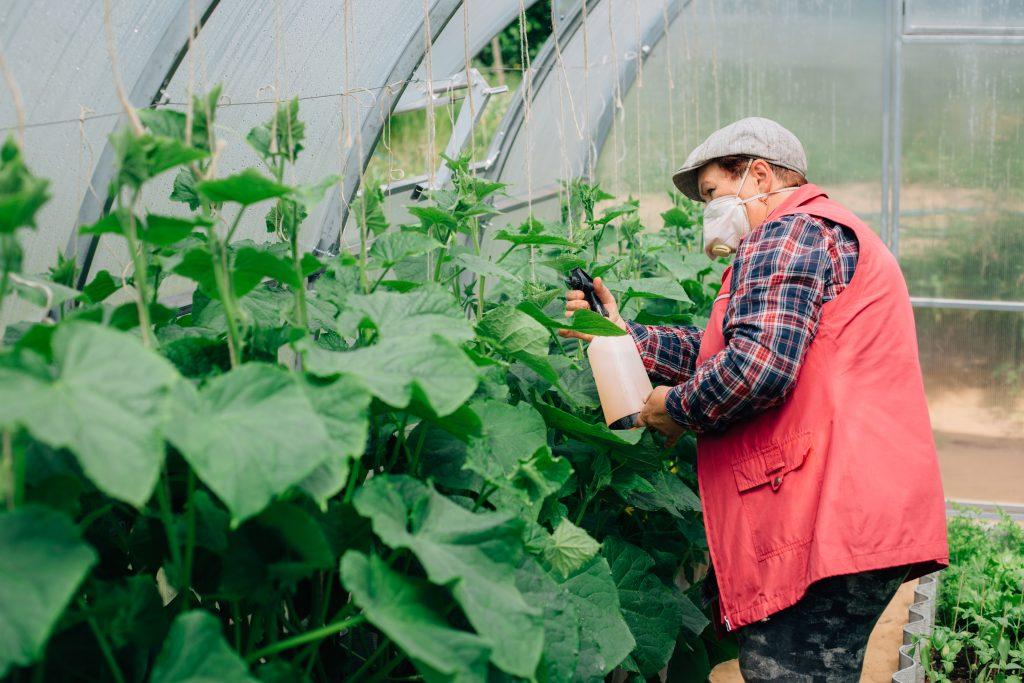 Как разводить метронидазол для растений