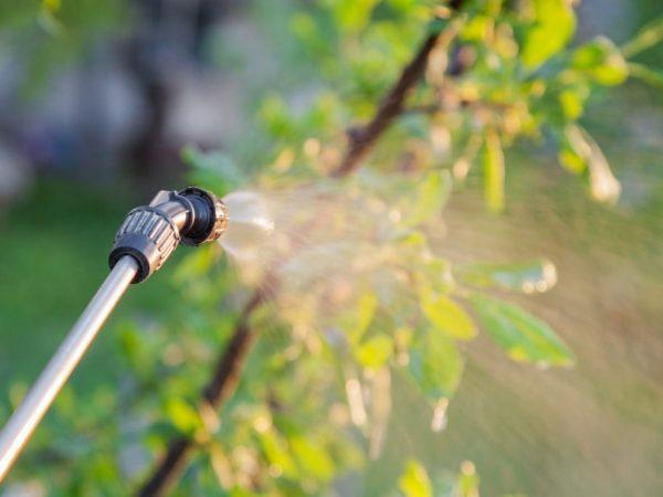 Обработка поможет спасти дерево