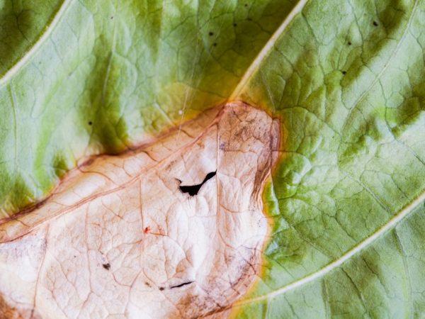 Почему желтеют листья у огурцов | 450x600