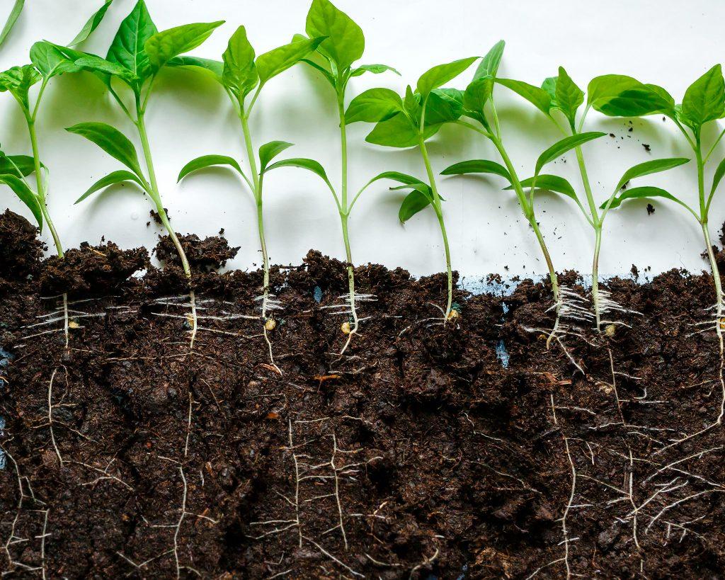 Как приготовить землю для выращивания рассады томатов и перцев в домашних условиях