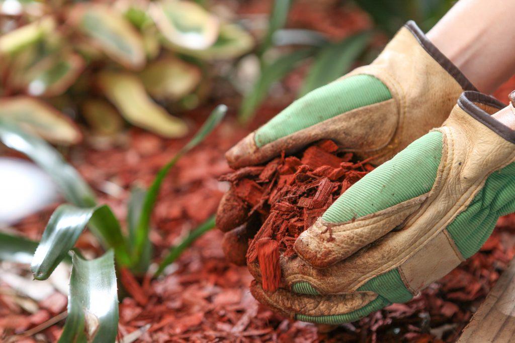Посадка и выращивание картофеля по методу Картелева