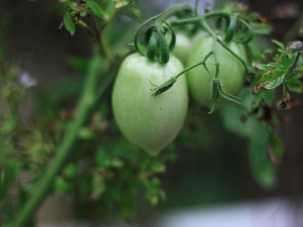 Растения устойчивы к капризам погоды