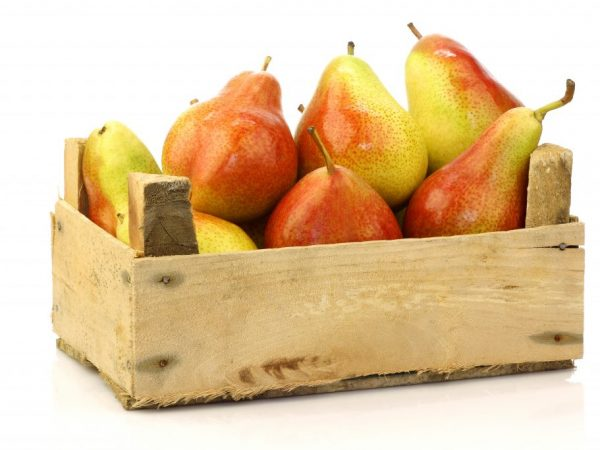 Описание плодов груши