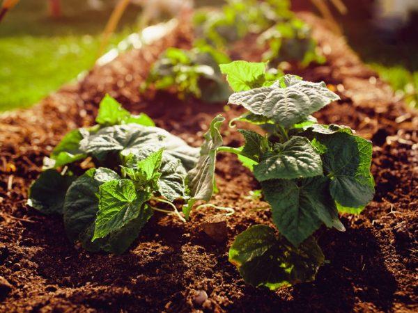 Растению необходимы питательные вещества