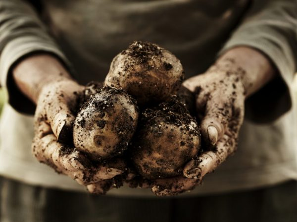 Отбираем картошку