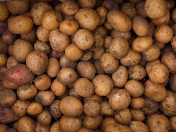 Не крупный картофель