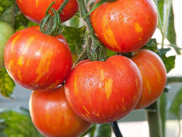 Плоды отлично подходят для приготовления салатов