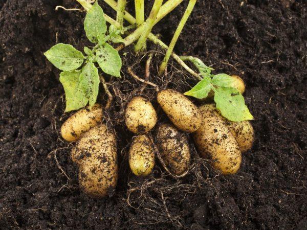 Выбираем способы выращивания