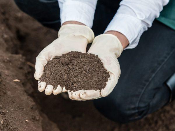 Подготовка землесмесей и почвы в теплице под помидоры