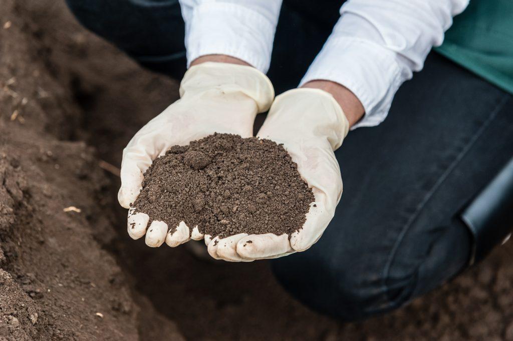 Подготовка почвы в теплице под помидоры: грунт и земля