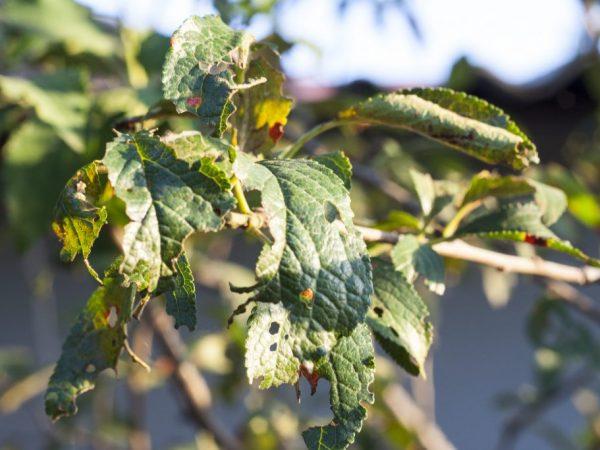 Дезинфекция помогает избавиться от насекомых