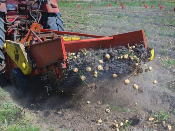 Виды тракторов для обработки картофеля