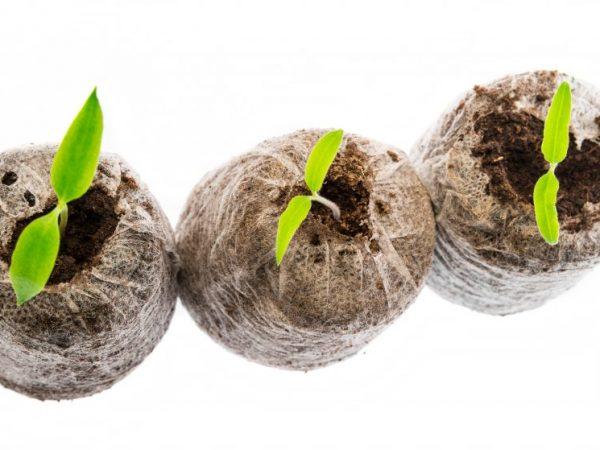 Выращивание в торфяных таблетках поможет обойтись без пикировки