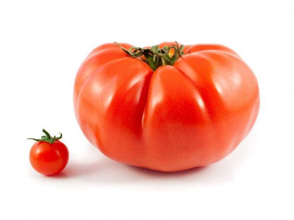 Характеристика томата сорта Уральский Гигант