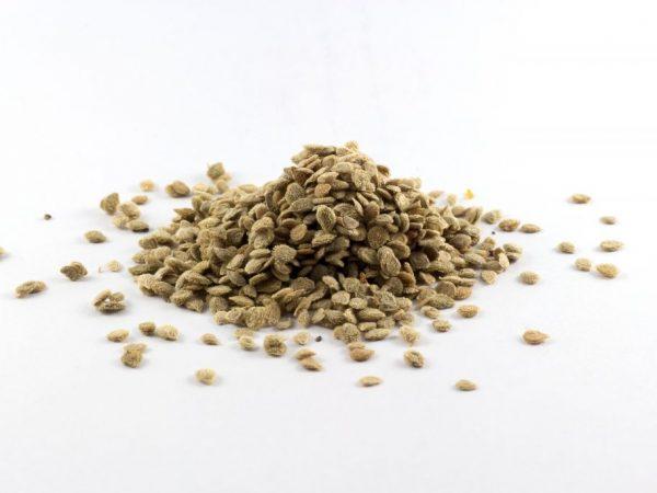 Тщательно подготовте семена для посадки