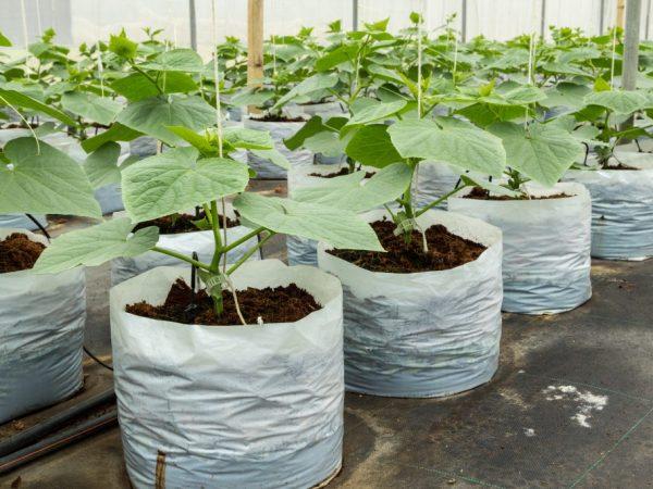 Растениям нужно обеспечить хороший уход