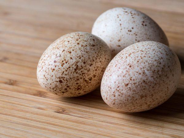 Польза и вред индюшиных яиц