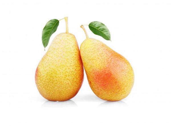 Цвет плодов желтый с розово-красным румянцем