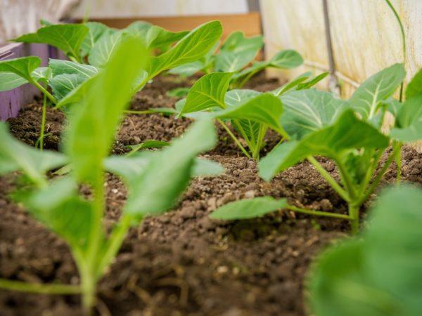 Правильный уход повысит урожайность растений